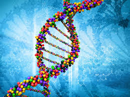 Hipertrofi ve Genetik